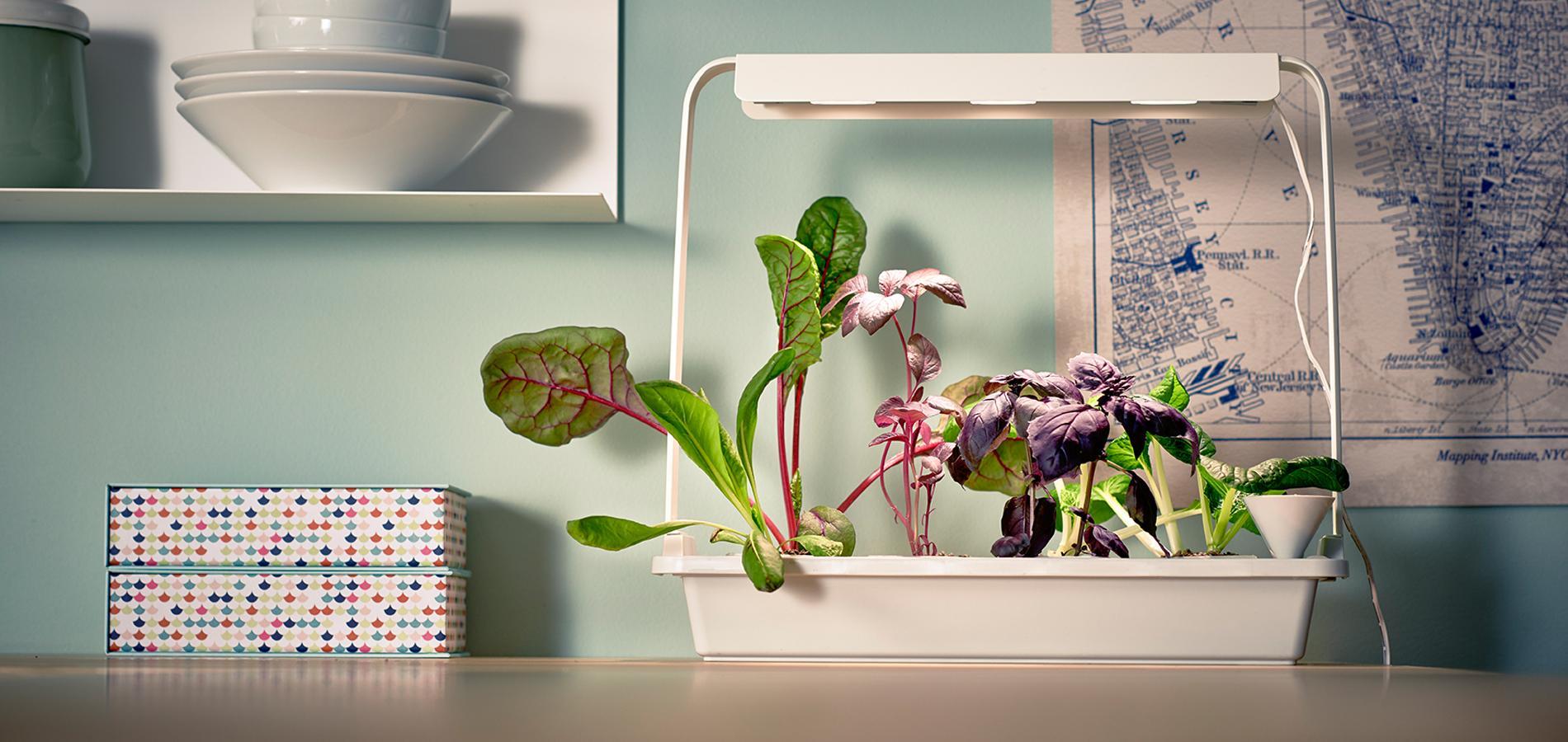 cr er un potager dans sa cuisine le nouveau plaisir en. Black Bedroom Furniture Sets. Home Design Ideas