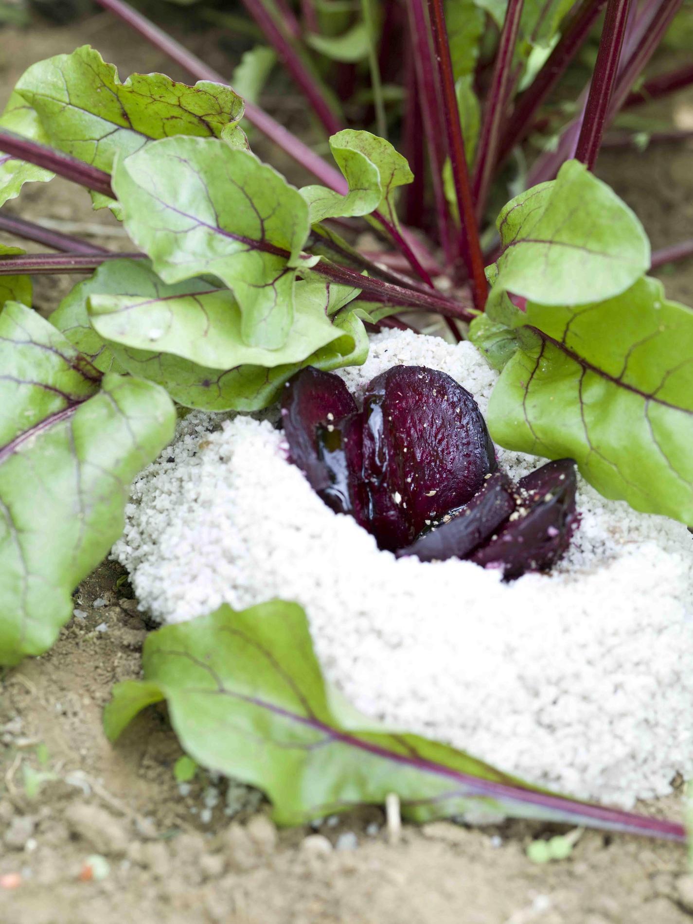 recette betterave rouge en cro te de sel de gu rande cuisine madame figaro. Black Bedroom Furniture Sets. Home Design Ideas