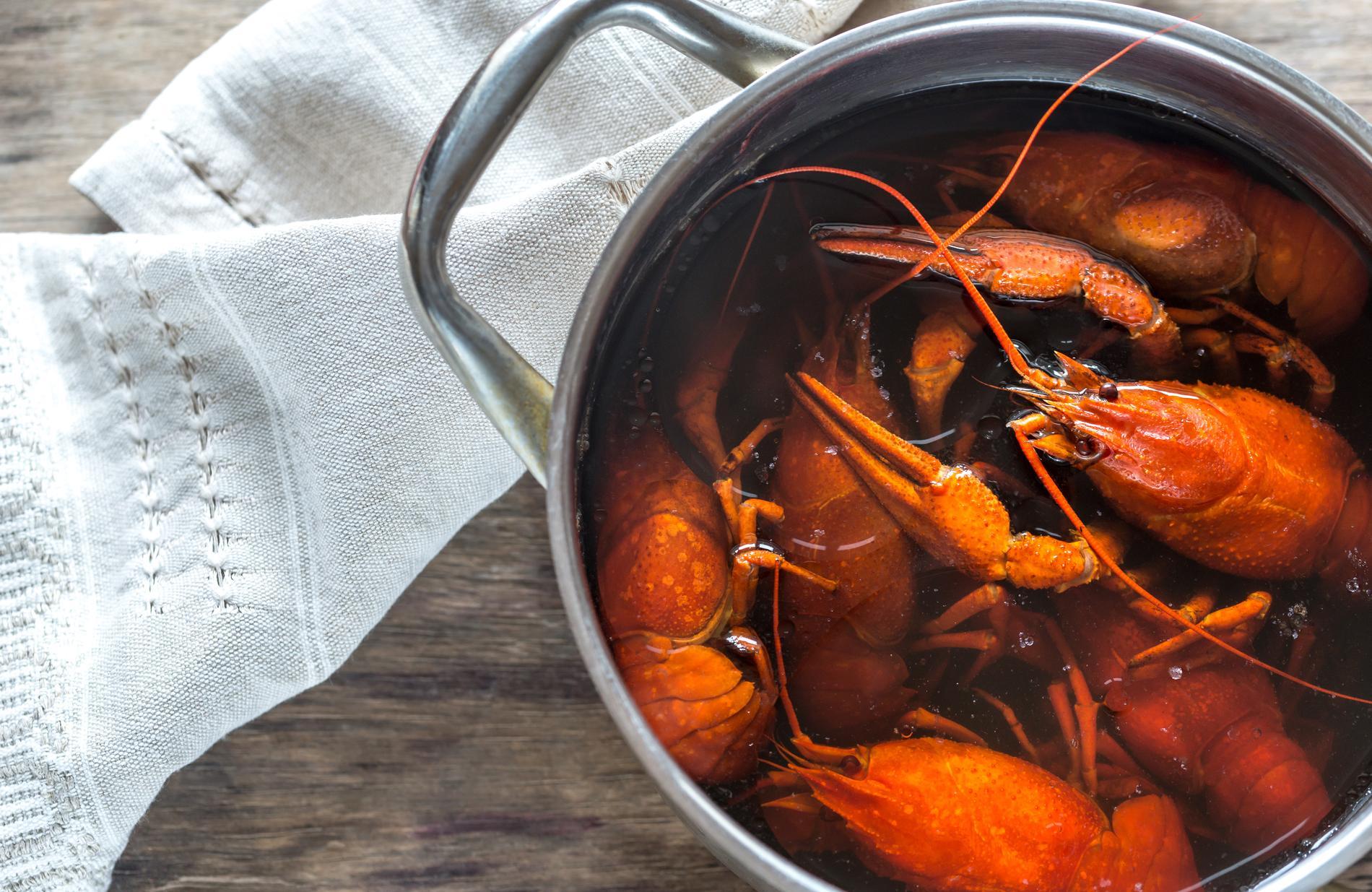 Petit pr cis sur l art de cuire et de cuisiner le homard - Comment cuisiner le homard ...