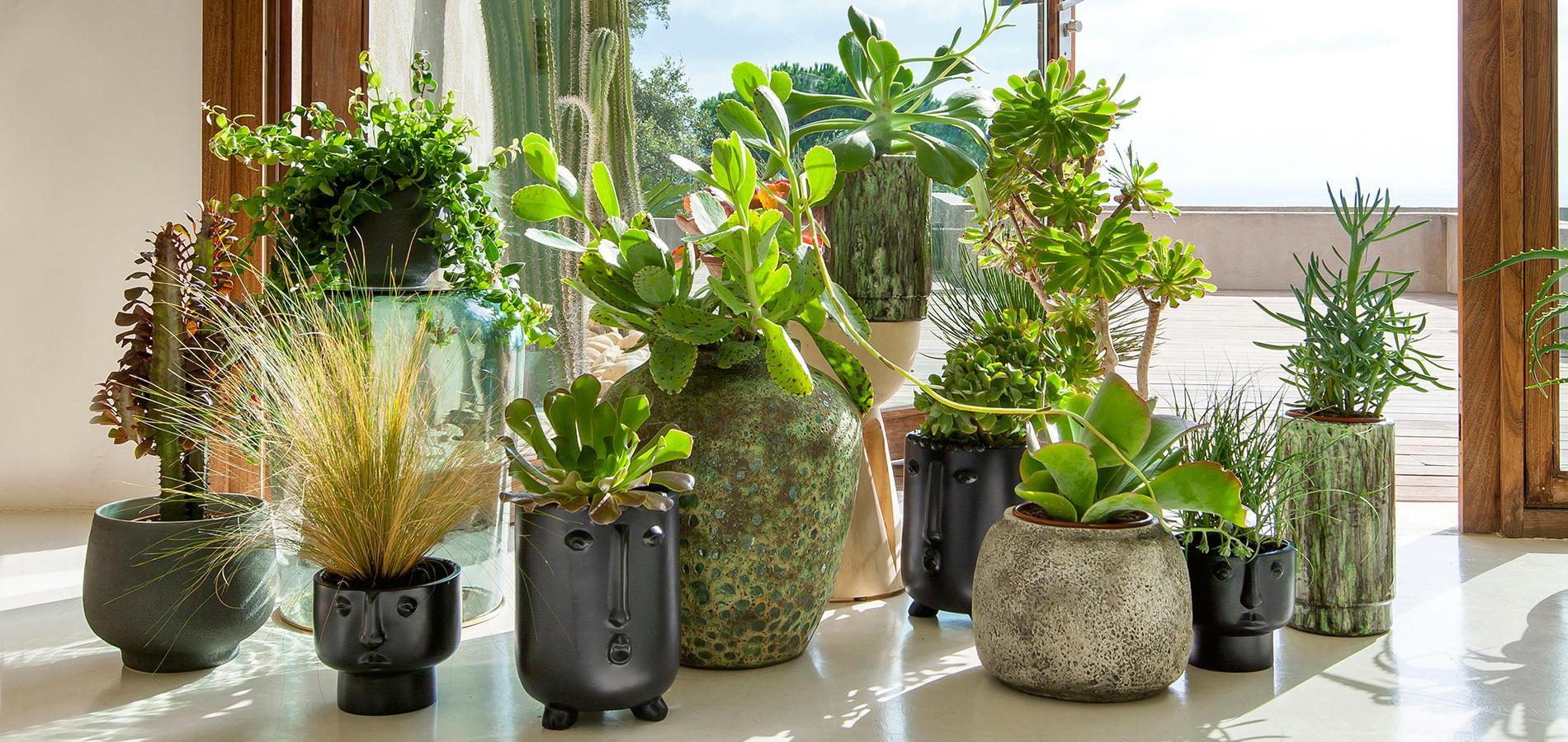Cache pots et suspensions design pour des plantes du sol au plafond madame figaro - Plante de salon ...