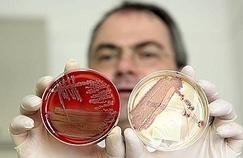 Identifiée, la bactérie tueuse résiste aux scientifiques