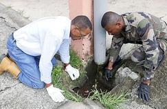 Les Antilles en guerre contre la dengue
