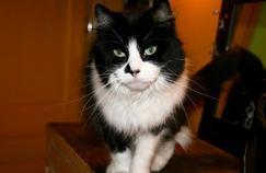 Cancer du cerveau: les chats injustement accusés