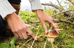Ce qu'il faut savoir avant de cueillir des champignons