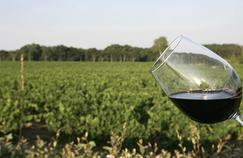 Vin rouge : les bienfaits du resvératrol mis en doute