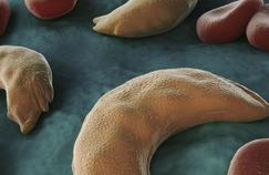 «Il y a trop de silence sur la drépanocytose»