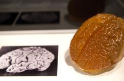 Comment le cerveau prend le pli