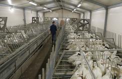 Le ministère suspend la production de canards dans le Sud-Ouest
