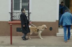 Les chiens d'aveugles encore à la porte des lieux publics