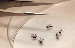 Le virus du Nil occidental détecté sur un Français dans le Gard