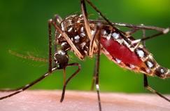 Le virus Zika se propage en Amérique du sud