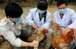 Grippe H7N9 : la Chine prend des mesures après un 6e décès