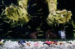 La «fish pedicure» n'est pas sans risque