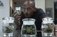 Le délicat usage du cannabis thérapeutique