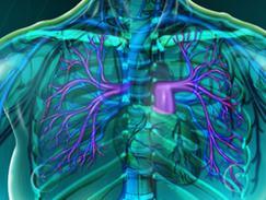 Artère pulmonaire