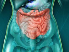 Intestin grêle