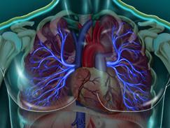 Veine pulmonaire