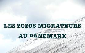 Les zozos migrateurs