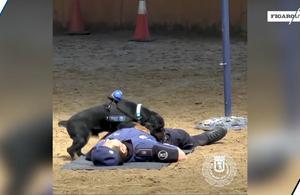 Poncho, le chien de la police espagnol qui fait des massages cardiaques