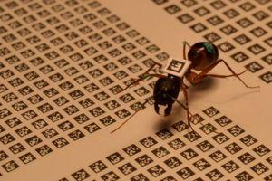 Chaque matrice d'identification est unique. (crédits photo: Alessandro Crespi)