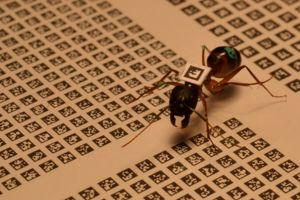 Chaque matrice d'identification est unique. <i>(crédits photo: Alessandro Crespi)</i>