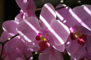 Exposez les orchidées à la lumière, si possible près d'une fenêtre exposée au sud.