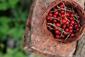 Les groseilles à grappes s'apprécient mieux en gelée ou en coulis que crues en raison de leur acidité.
