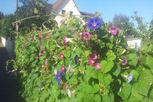 Au jardin ce week-end : préparez-vous un bel été fleuri