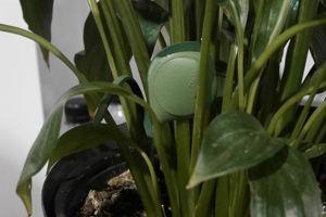 Le GEM de MEG, objet connecté pour plante, se fait très très discret pour «prendre le pouls» du végétal