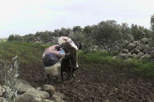 Transport de matériel dans le nord de Homs. (Crédit photo: MSF)