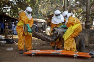 Une équipe de la Croix Rouge prend en charge un malade suspecté d'Ebola, le 30 janvier à Forecariah (Guinée).