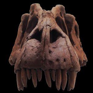 Le T. Rex a un grand-oncle baptisé le « roi du sang »
