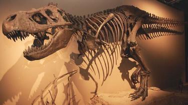 Les dinosaures ont bien été victimes d'une météorite