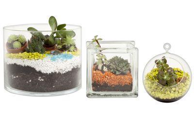 Contenants en verre proposés par Nature & Découvertes pour créer sa propre composition végétale (grand format: 14,95€; moyen: 12,95€; petit: 9,95€). DR