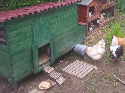 Vos poules doivent pouvoir disposer d'un toit pour la nuit et s'abriter des intempéries. DR