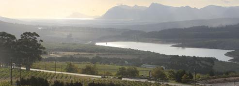 Sécheresse : la production de vin en Afrique du Sud baisse en 2018