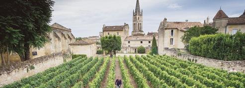 Les cépages de Saint-Émilion