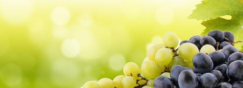 Que savez-vous sur les primeurs de Bordeaux ?