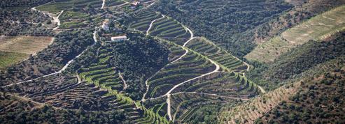 À la découverte du vin portugais
