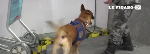 Le RAID entraîne la police de Rio en vue des jeux olympiques
