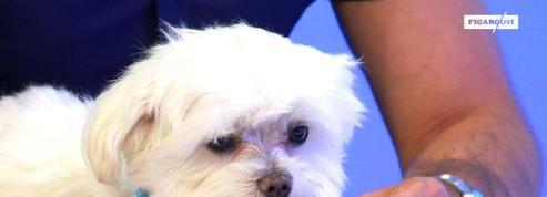 Zoothérapie : quand les animaux soignent les souffrances psychologiques