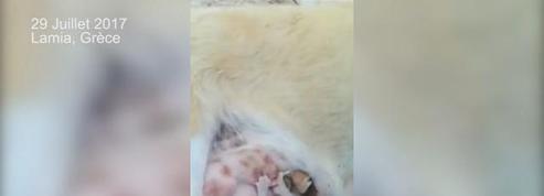 En Grèce, un chaton abandonné est sauvé par une chienne