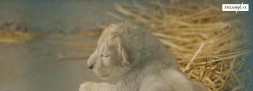 Jordanie : une lionne évacuée d'Alep donne naissance à un petit