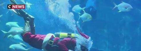 L'Aquarium de Paris accueille un Père Noël plongeur