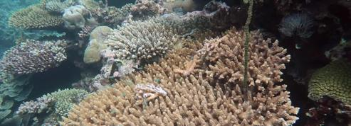 Récifs coralliens, une biodiversité menacée