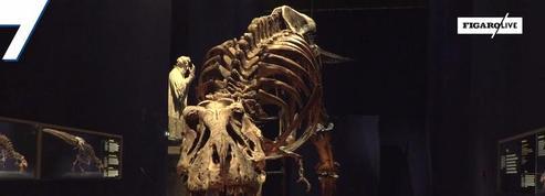 T-Rex : un squelette en visite à Paris