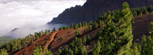Direction Tenerife pour échapper à la grisaille hivernale