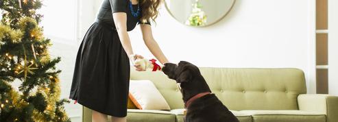 91% des Français offriront un cadeau de Noël à leur chien
