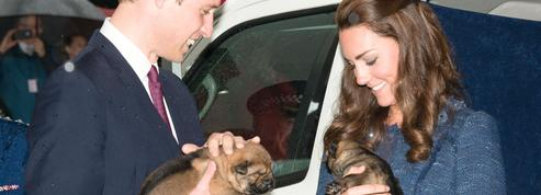 Kate Middleton et le prince William : la famille royale sur le point de s'agrandir