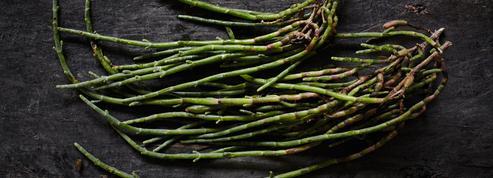La salicorne, l'allié diététique de nos assiettes d'été
